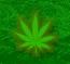 Нужно ли легализовать марихуану в России?